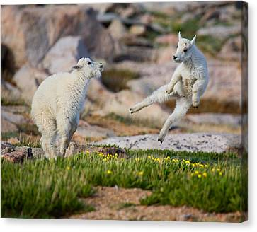 The Dance Of Joy Canvas Print by Jim Garrison