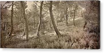 The Dance Of The Forest Canvas Print by Guido Montanes Castillo
