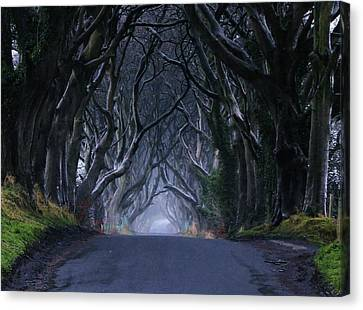 The Dark Hedges Canvas Print by Anne Kelly