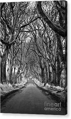 The Dark Hedges Beech Tree Avenue In Winter County Antrim Northern Ireland Canvas Print by Joe Fox