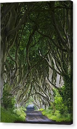 The Dark Hedges Canvas Print by Dan McGeorge