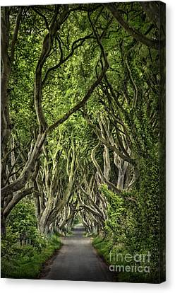 The Dark Hedges Canvas Print by Evelina Kremsdorf