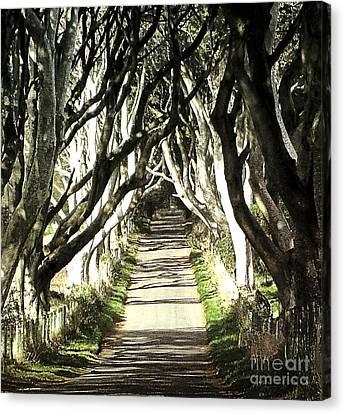 The Dark Hedges Canvas Print by Larry Ferreira