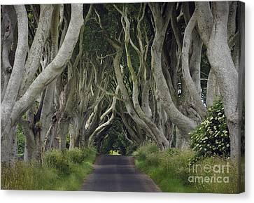 The Dark Hedges, Northern Ireland Canvas Print by John Shaw