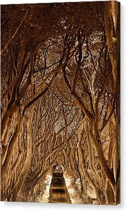 The Dark Hedges Canvas Print by Pierre  TORNERO