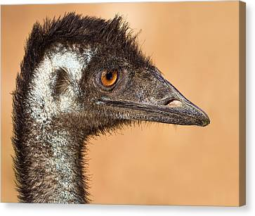 The Day I Met An Emu Canvas Print