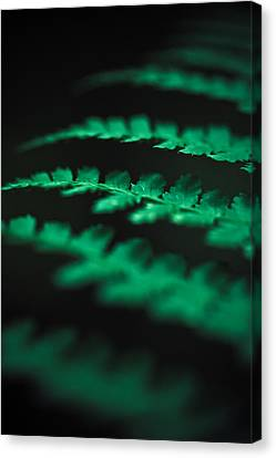 The Delicate Nature Of Ferns Canvas Print