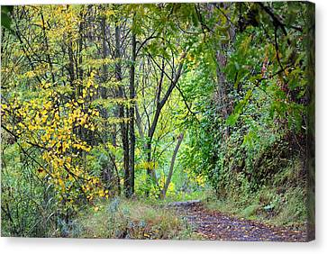 The Dense Forest Canvas Print by Guido Montanes Castillo