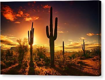 The Desert Awakens  Canvas Print by Saija  Lehtonen