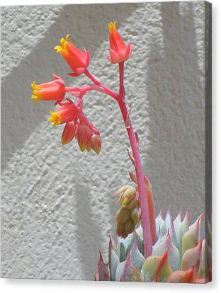 Canvas Print featuring the photograph The Desert Blooms by Lew Davis