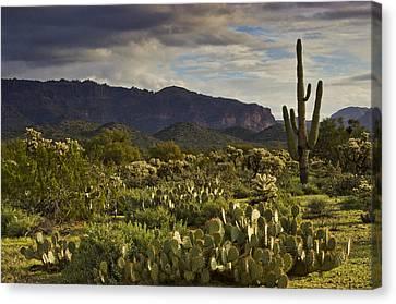 The Desert Is Wearing A Carpet Of Green  Canvas Print by Saija  Lehtonen
