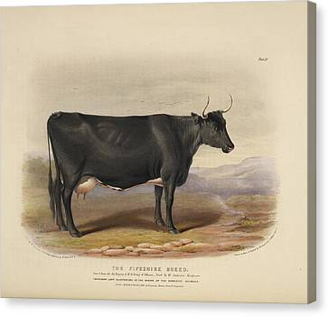 The Devon Breed Canvas Print by British Library