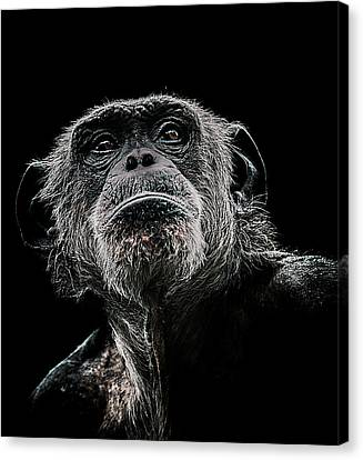 Primate Canvas Print - The Dictator by Paul Neville