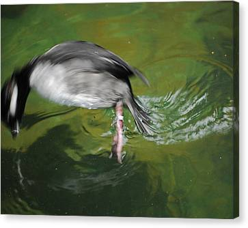 Canvas Print featuring the photograph The Dive by Maggy Marsh