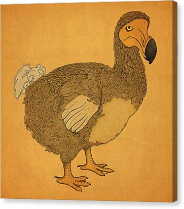 Canvas Print featuring the drawing The Dodo by Meg Shearer