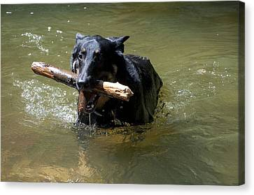 The Dog Days Of Summer Canvas Print by Bill Cannon