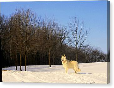 The Dog On The Hill Canvas Print by Kay Novy