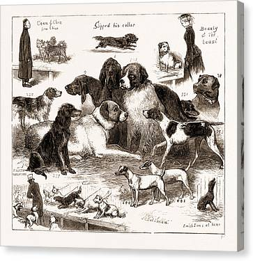 The Dog Show At The Crystal Palace, London Canvas Print