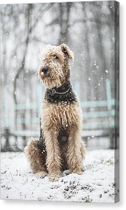 The Dog Under The Snowfall Canvas Print