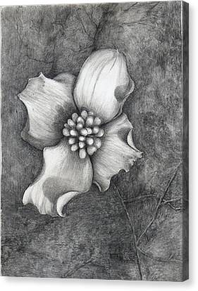 The Dogwood Canvas Print