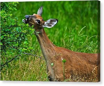 The Dreaded Deer Giraffe Canvas Print by Frozen in Time Fine Art Photography