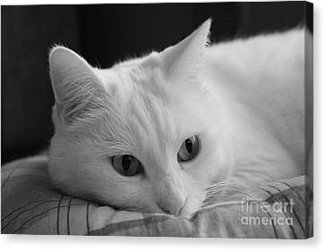 The Dreamer Cat Canvas Print