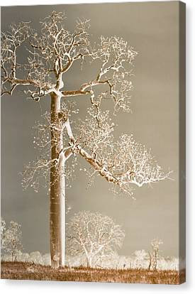 The Dreaming Tree Canvas Print by Holly Kempe