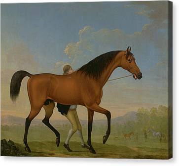 The Duke Of Ancasters Bay Stallion, Blank Canvas Print