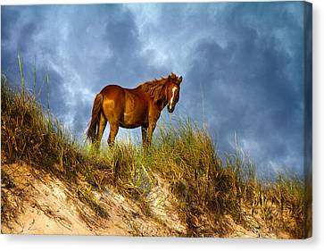 The Dune King Canvas Print by Betsy Knapp