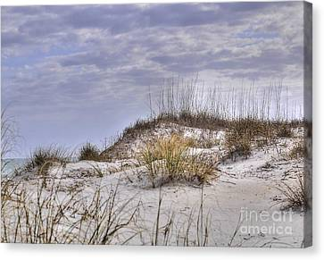 Canvas Print featuring the photograph The Dunes At Huntington Beach State Park by Kathy Baccari