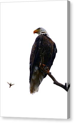 The Eagle And The Hummingbird Canvas Print by Tranquil Light  Photography