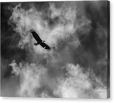 Eagle In Flight Canvas Print - The Eagle Bw by Ernie Echols