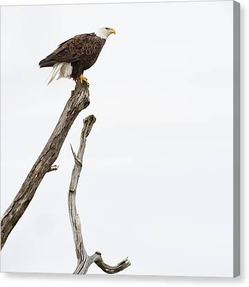 The Eagle Has Landed Canvas Print by Annette Hugen