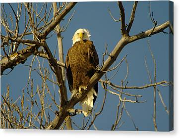 The Eagle Looks Down Canvas Print by Jeff Swan