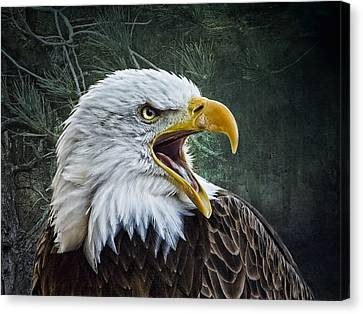 Canvas Print featuring the photograph The Eagle's Cry by Brian Tarr