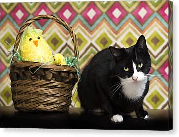 The Easter Tiggy Canvas Print