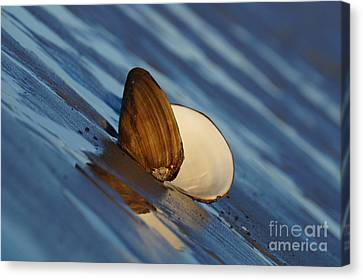 The Easy Catch Canvas Print