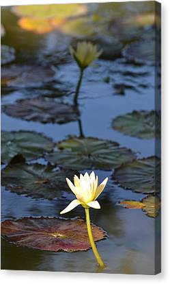 The Echo Of A Lotus Flower Canvas Print by Bill Mock