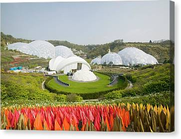 The Eden Project In Cornwall Canvas Print by Ashley Cooper