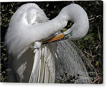 The Elegant Egret Canvas Print by Lydia Holly