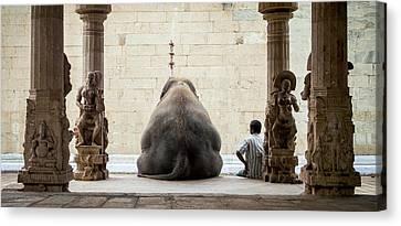 The Elephant & Its Mahot Canvas Print