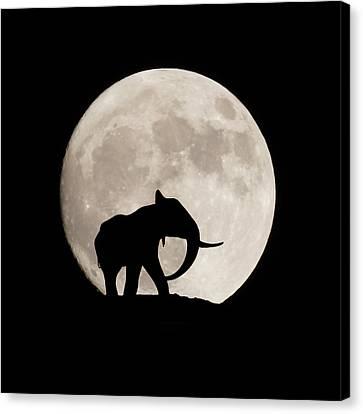 Elephants Canvas Print - The Elephant by Ernie Echols