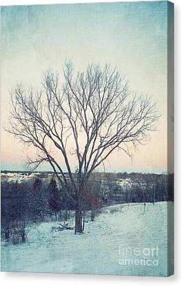 The Elm In Winter Canvas Print by Kay Pickens