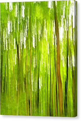 The Emerald Forest Canvas Print by Bill Gallagher