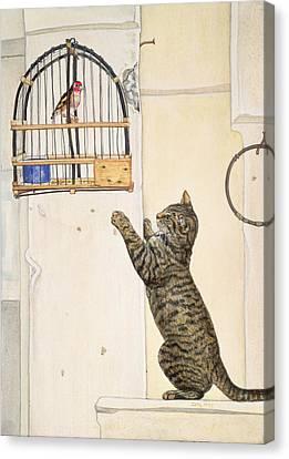 The Essuaira Bird Canvas Print by Ditz