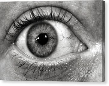 The Eye Canvas Print by Luke Moore