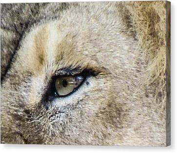 The Eye Of A Lion Canvas Print by Michael Putthoff