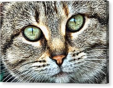 The Eyes Have It Canvas Print by Kenny Francis