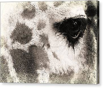 The Eyes Have It Canvas Print by Michelle Frizzell-Thompson
