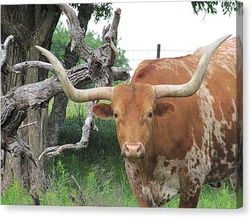 The Eyes Of Texas Canvas Print
